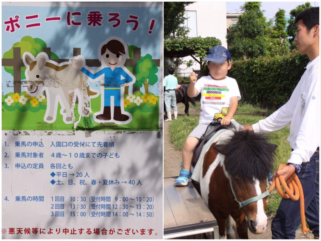 あらかわ遊園ポニー乗馬体験