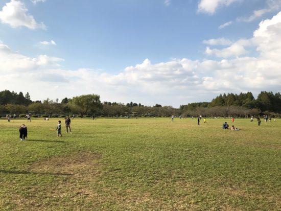みさと公園芝生2