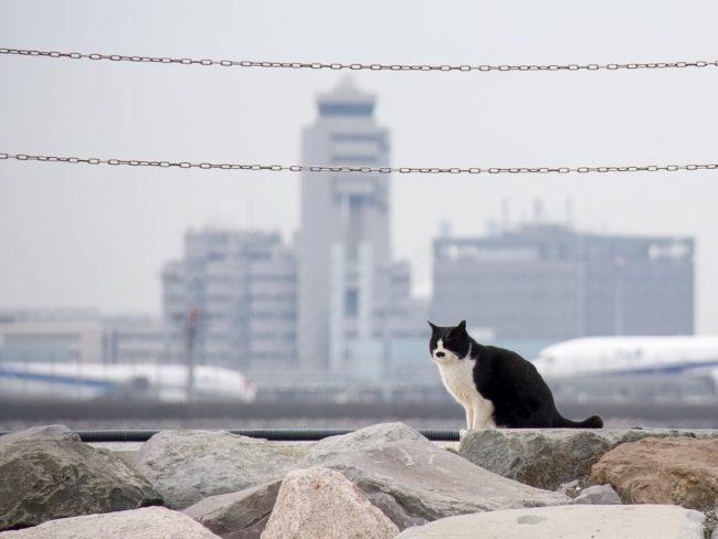 城南島海浜公園猫